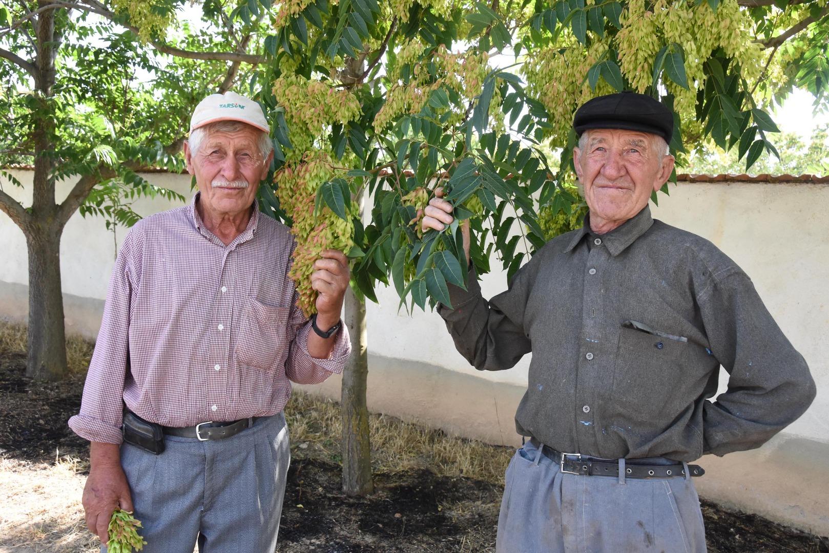 'Ağaç dede'ler 10 yılda binin üzerinde fidan dikti