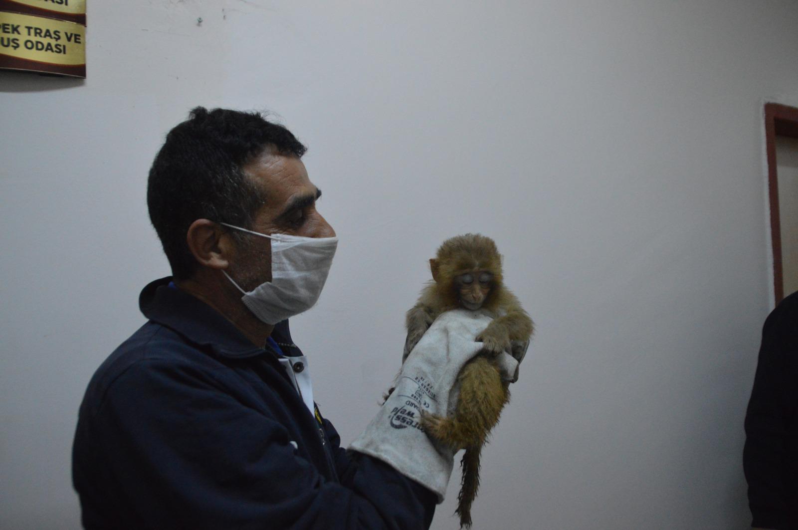 Gürbulak'ta ele geçirilen 12 maymun, Gaziantep Hayvanat Bahçesi'nde