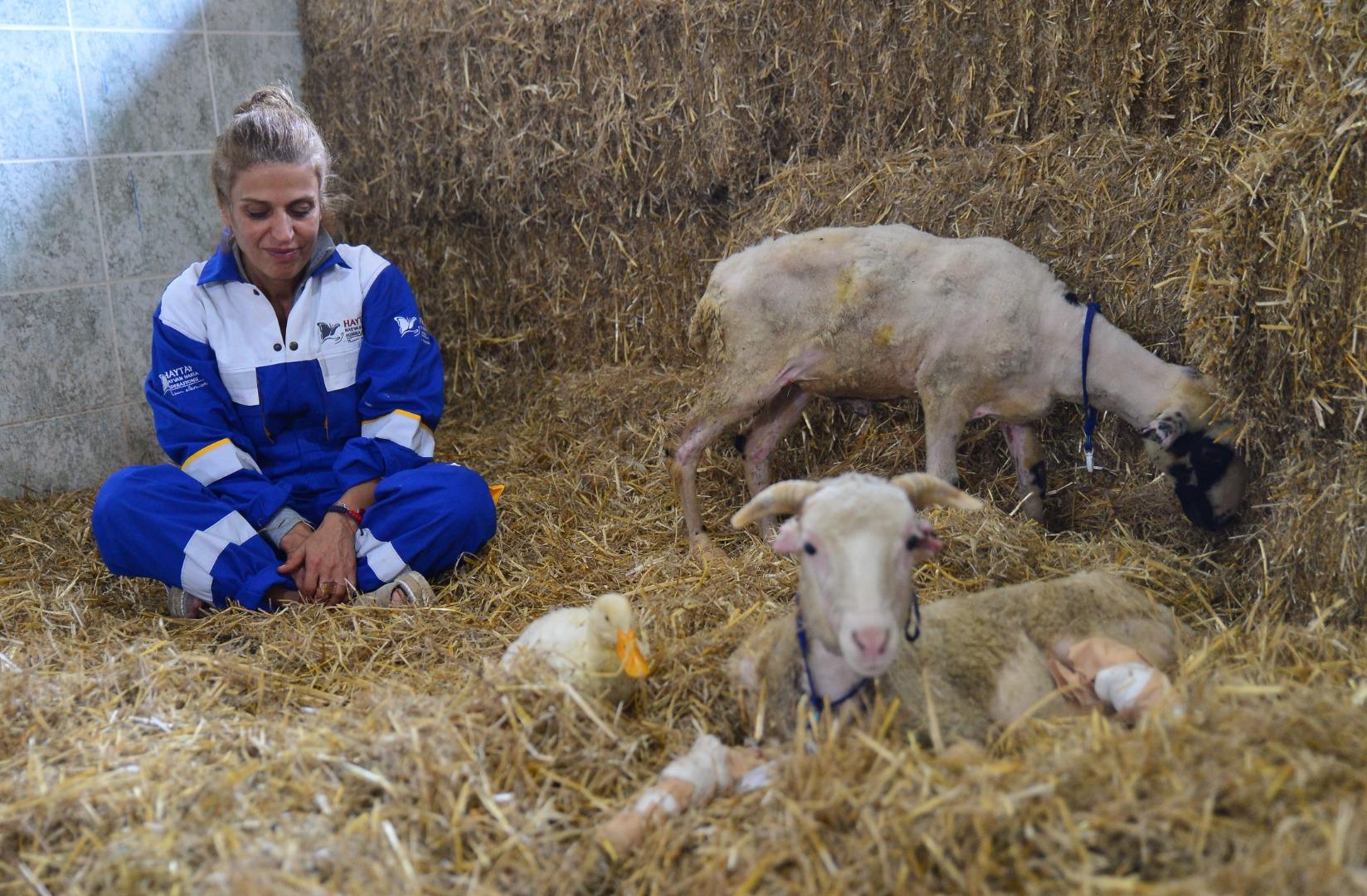 Yangından kurtarılan hayvanların çiftlikte uyumlu yaşamı
