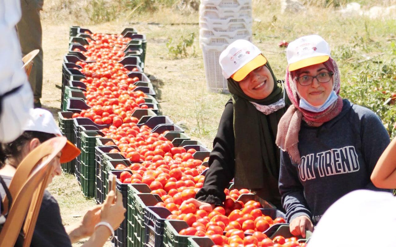 İzmir'deki 'son hasat'ta 1 ton domates