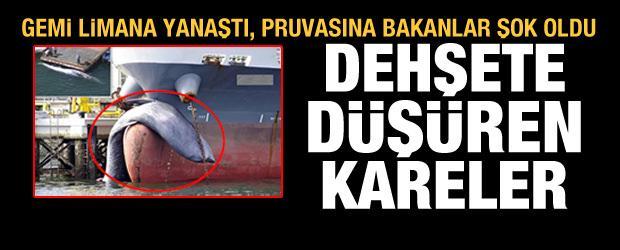 Dev gemi limana, pruvasında ölü bir balinayla yanaştı