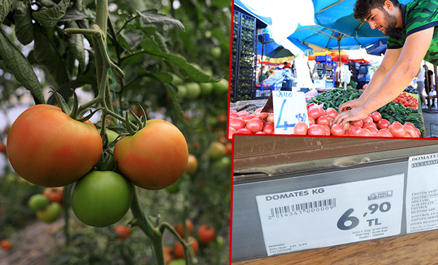 Seradan 2.5 liraya çıkan domatesin fiyatı 5 kilometrede yüzde 176 artıyor